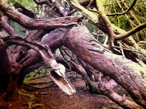 Yew tree serpent