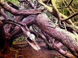Yew tree serpent