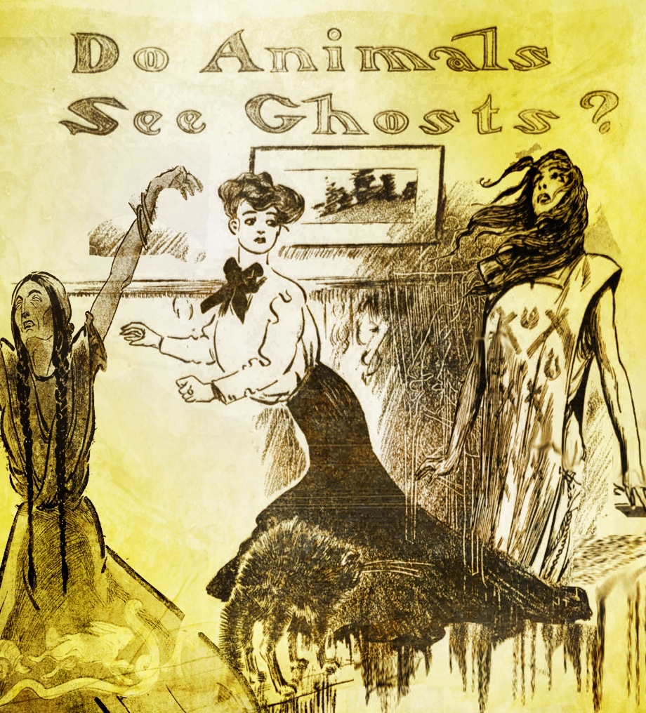 Do animals see ghosts?